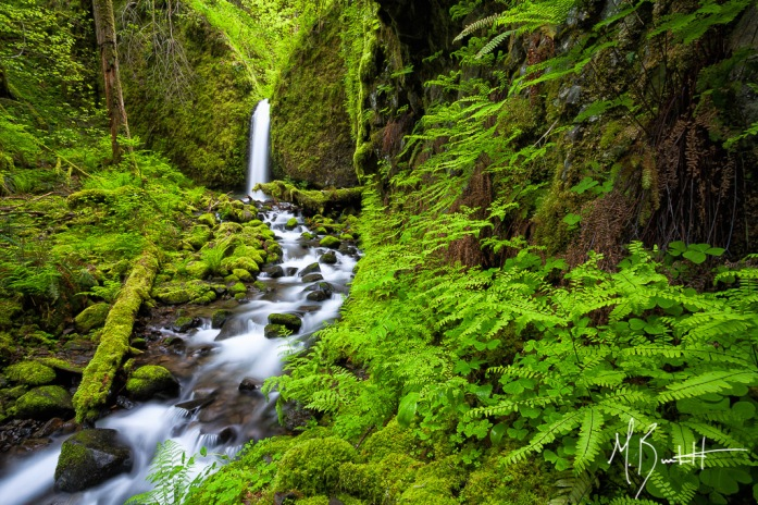 "Mossy Grotto Falls, as it's fondly referred to as, is a verdant green waterfall tucked away snugly in small canyon of the Columbia River Gorge. This was my ""white whale' for 2014. I set out to explore this part of the Gorge in 2013, but had poor luck in finding it. I set out to find this spot in 2014 and I was blessed enough to find it and spent a morning all alone photographing it. If you do happen to stumble upon this hidden gem, please be very respectful of the area due to it's delicate nature."